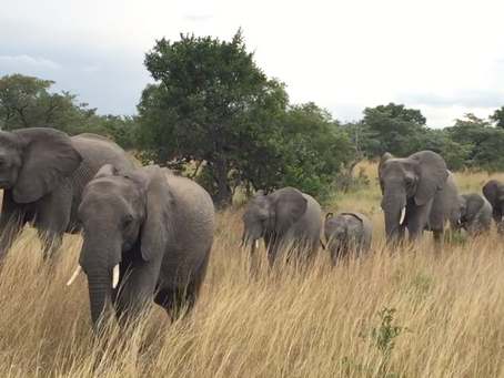 Can a Song Help Raise Awareness About the Poaching Crisis?