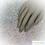 Thumbnail: Iridescent Crystal Photography Mat