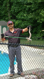 Wow, you never know what you might encounter as a Nelon-Cole technician.  We fear no snake!