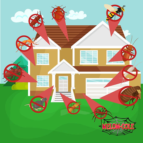 infested house 2.jpg