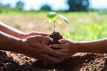hands planting.jpg