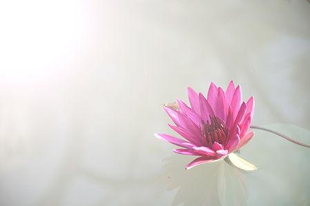 flora-1839558_1920_edited.jpg
