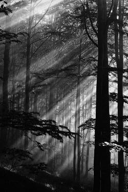 bosque (1).jpg