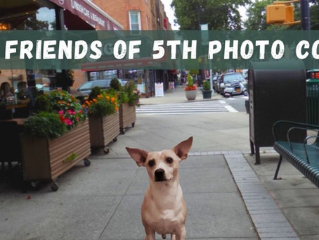 Celebrate Walk Your Dog Month with the 5th Ave BID, Brooklyn Pet Supply, and My Natural Pet