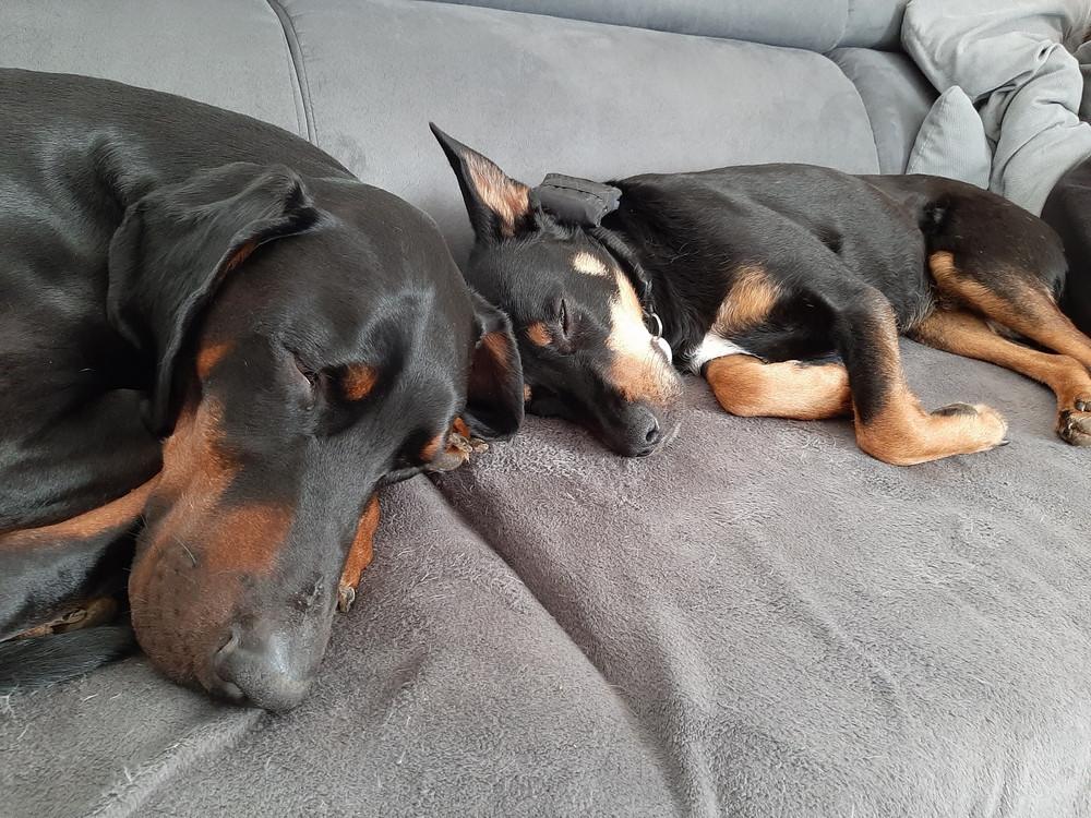 Tyson und Josie schlafen auf dem Sofa