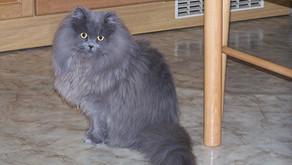 Unsere Katzenbande