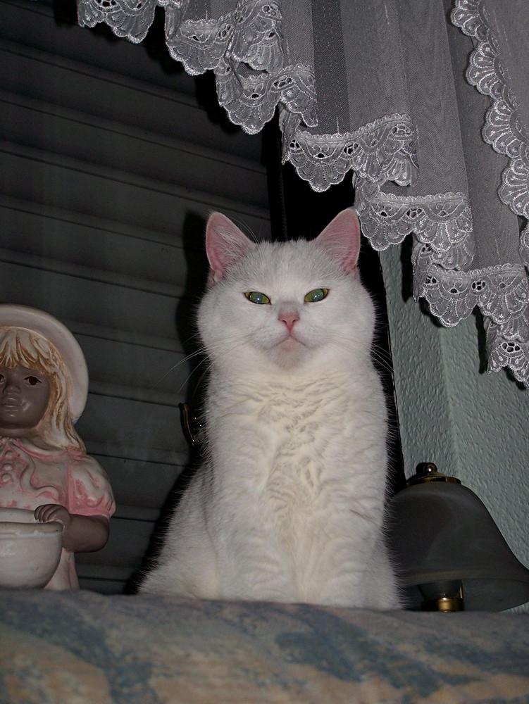 Persermix Luna sitzt auf der Fenserbank