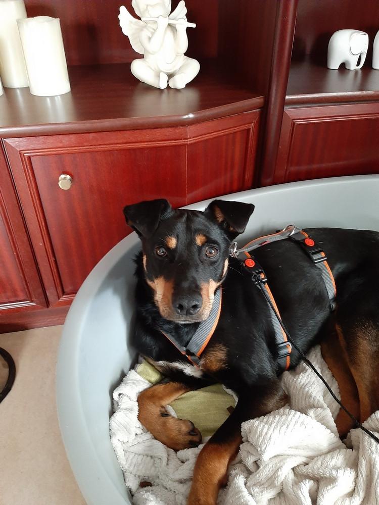 Josie liegt im Körbchen und schaut neugierig