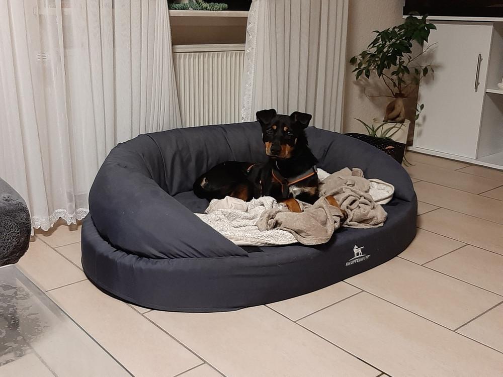 Josie hat ein weiteres Hundebett im Haus für sich entdeckt