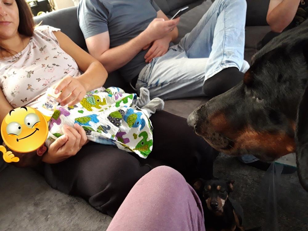 Dobermann Tyson betrachtet neugierig trinkendes Baby