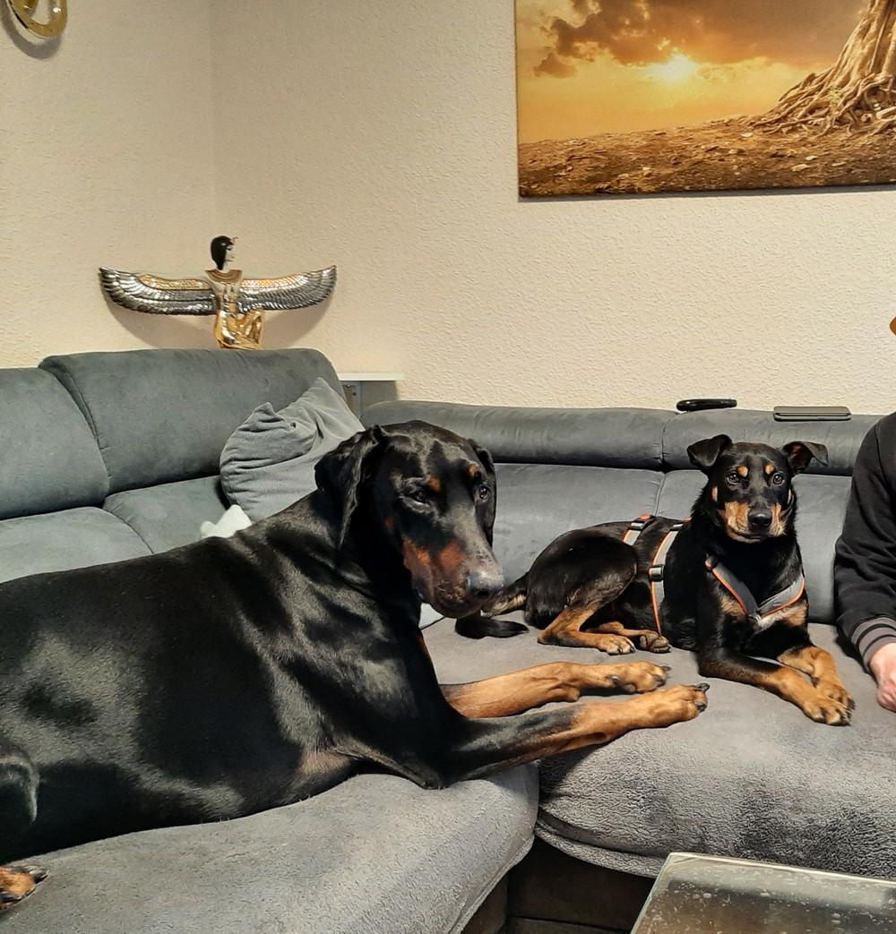 Josie mit Tyson auf dem Sofa