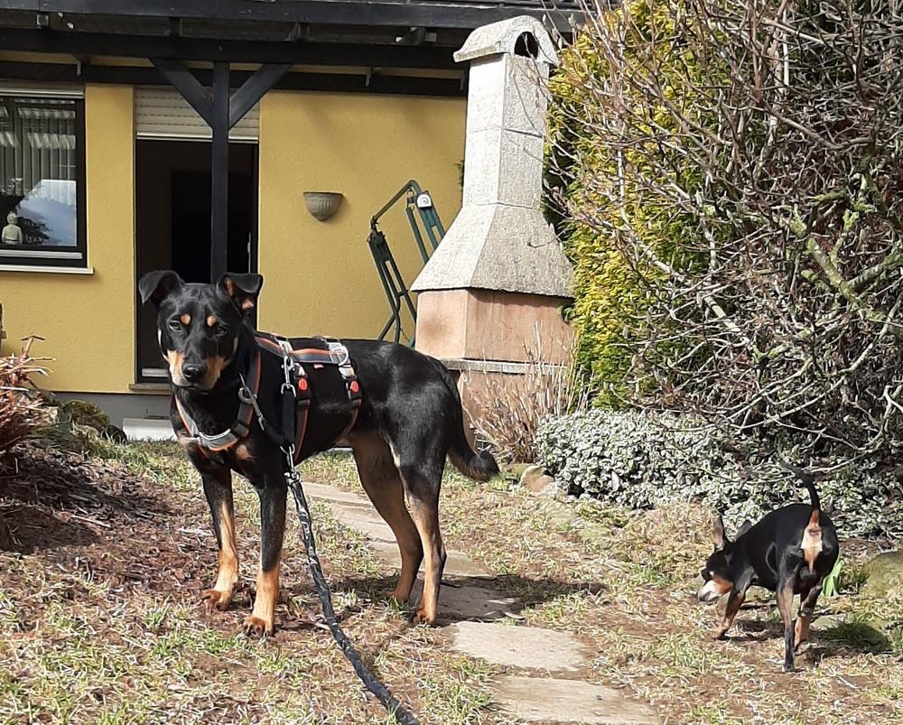 Josie und Spike im Garten