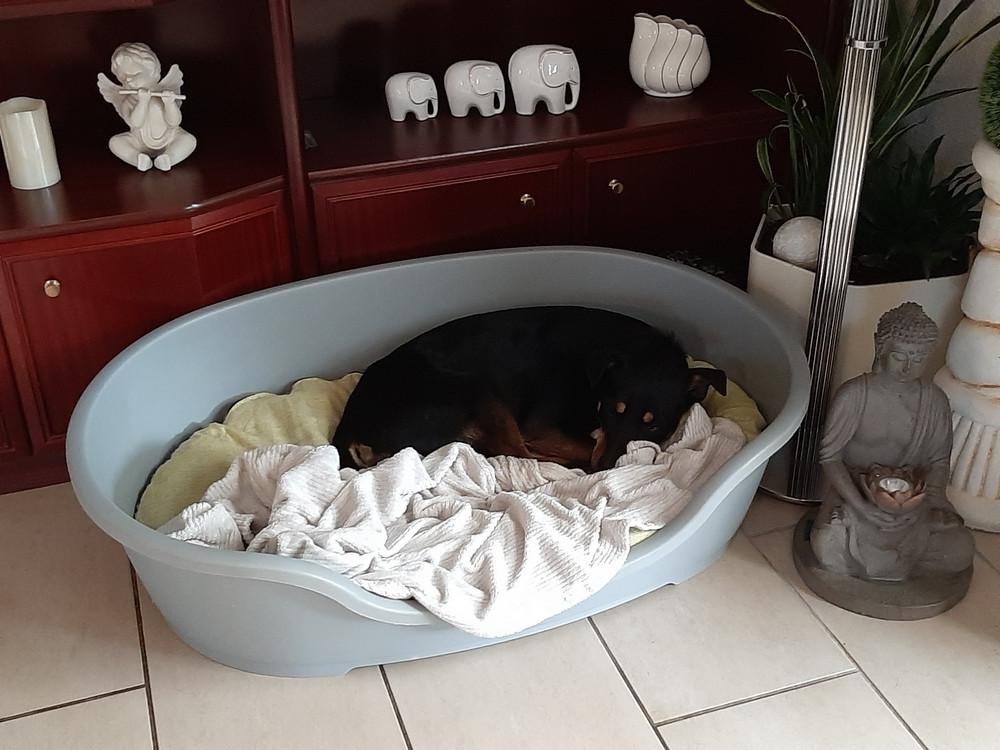 Angsthund Josie in ihrem Körbchen