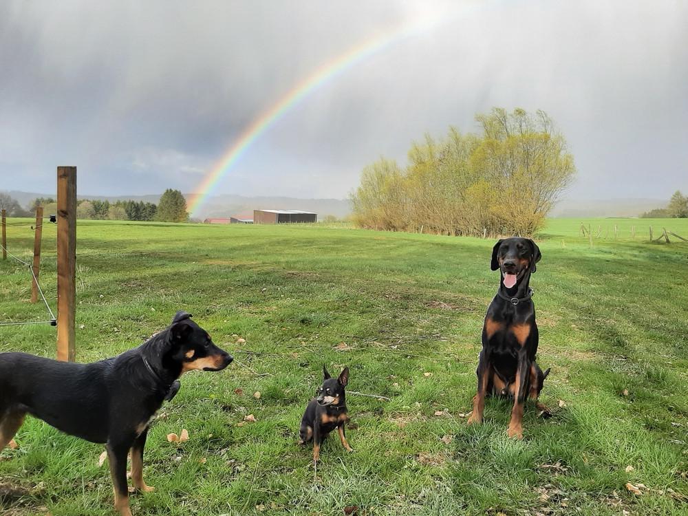 Tyson, Spike und Josie mit Regenbogen