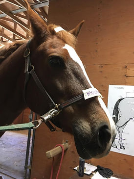 learning the parts of the horse in stable management with  KC