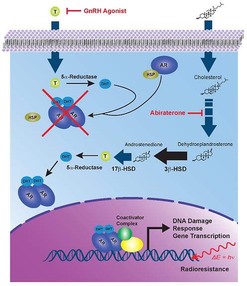 Targeting HSD3B1 Associated Extragonadal