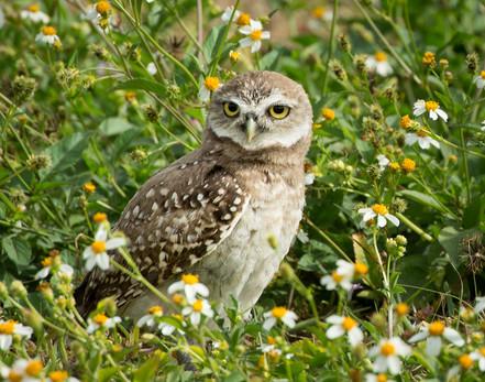 Curious Juvenile