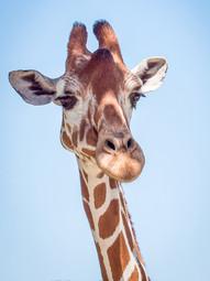 Baby Giraffe at Fossil Rim