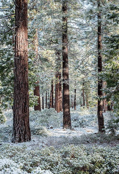 Landscape-First Snow - Lake Tahoe web pa