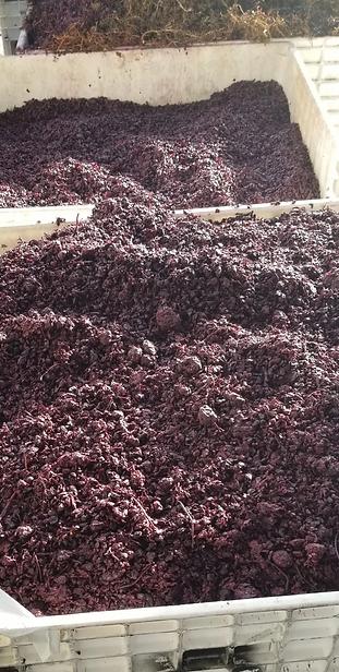Grape Derivative_Winecrush_2019-11-02_15