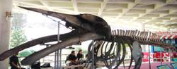 โครงกระดูกสัตว์โลกใต้ทะเล