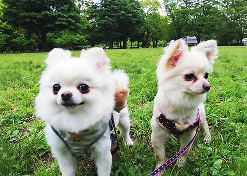 芝生犬.jpg