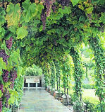 Vineyard-900x900.jpg
