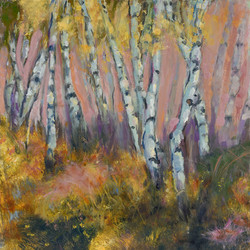Field of Birch Trees