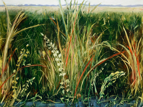 19. Color of reeds