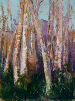 Elegant Birch Trees #1