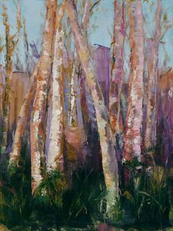 Elegant Birch Trees #1