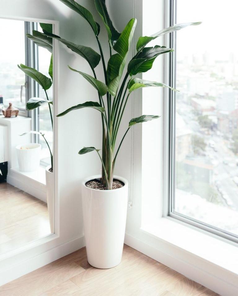 Tendencias en plantas de interior; esta