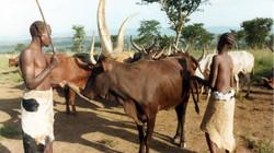 Rwanda's Lost Tribe