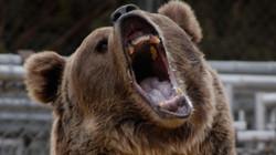 NAT GEO WILD: Bear Evidence