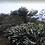 Thumbnail: Guatemala - Finca Santa Ana La Huerta