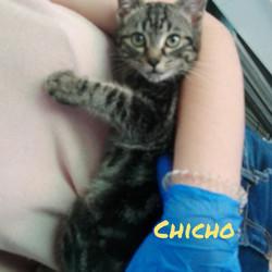 CHICHO - Macho