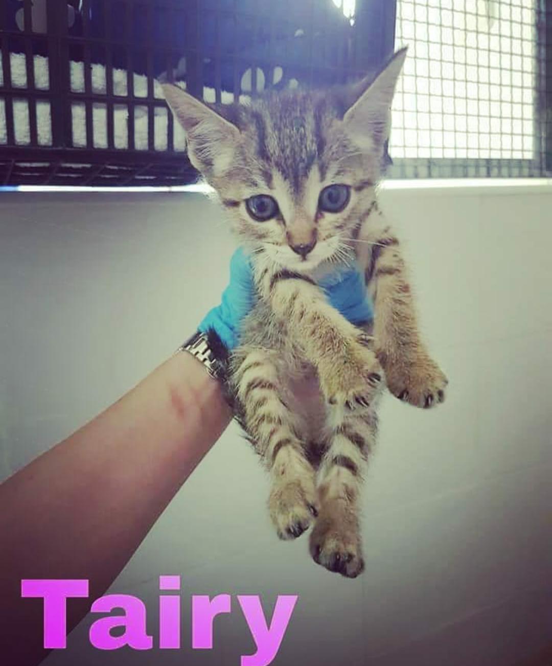TAIRY