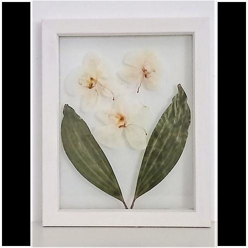 Quadro Orquídeas II