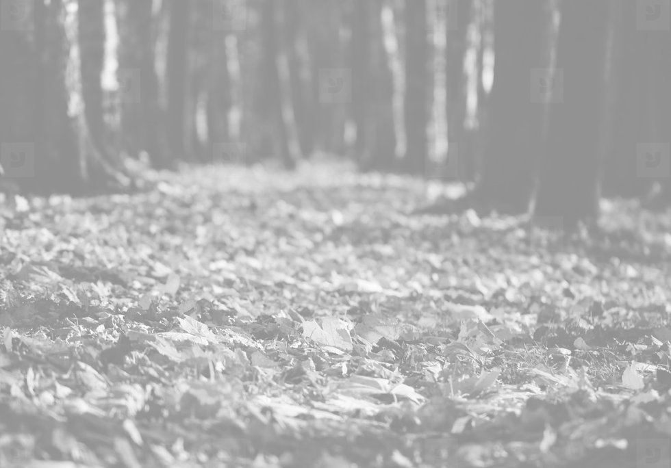 background leaves.jpg