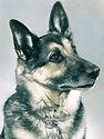 scan0002edit_blkwht_colour dog.jpg