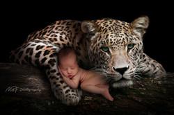 Las Vegas Newborn photographer, MBF Photography