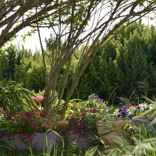 אחזקת גינות: טיפול שוטף בצמחייה, מערכות השקייה ובריכות נוי