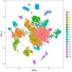 single transcriptomic analysis of developing mouse skin