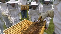 Bee meeting.jpg