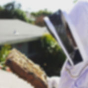 Frame check from Beekeeping like a girl.