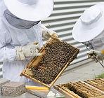 beekeeper-2650663_1280.jpg