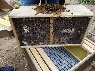 Package o bees.jpg