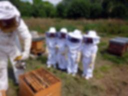 beekeeping-803495_1920.jpg