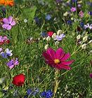 wildflowers-3571119_1920.jpg