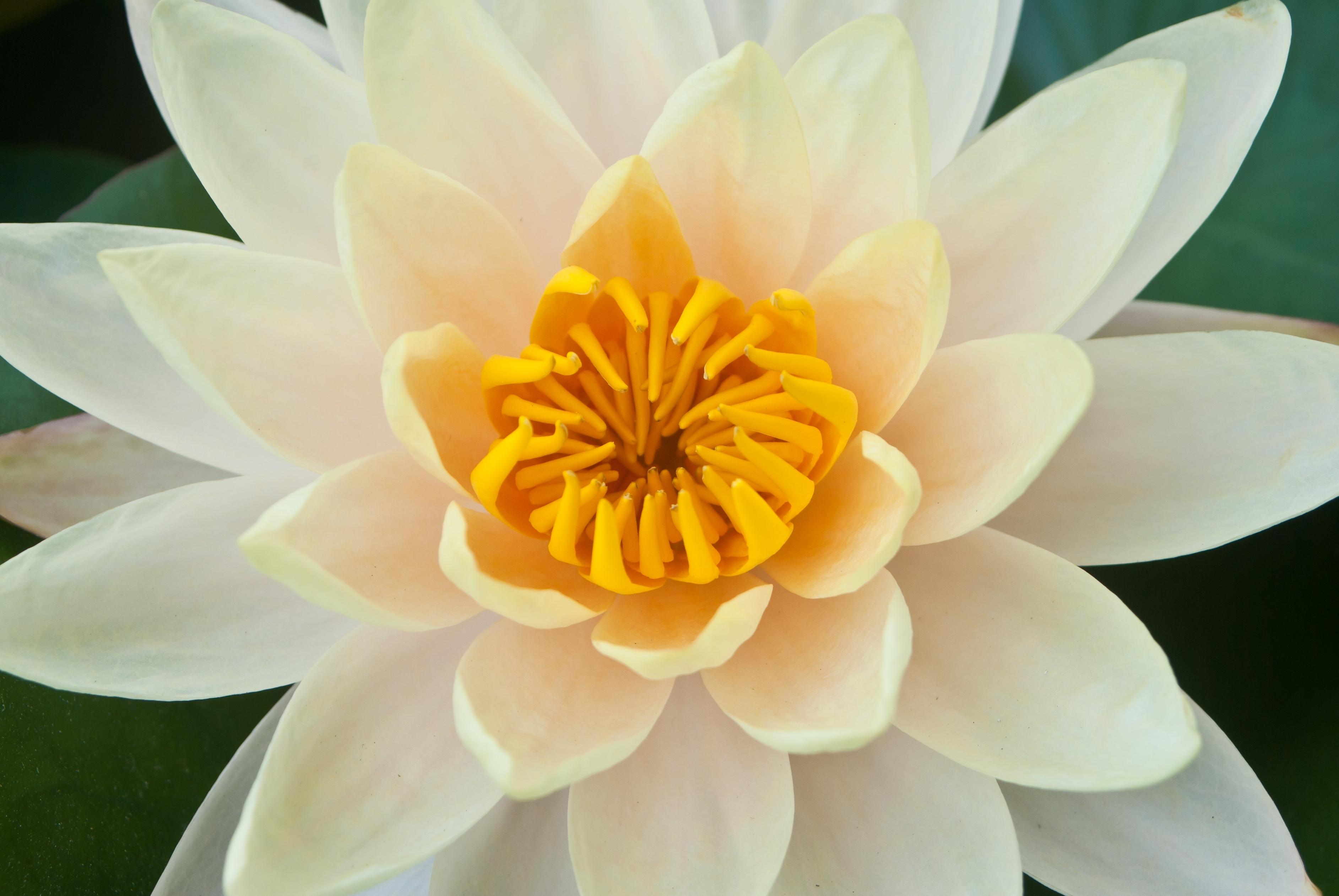 Konstanza Morning Star Psychic Medium And Shaman Silver Spring